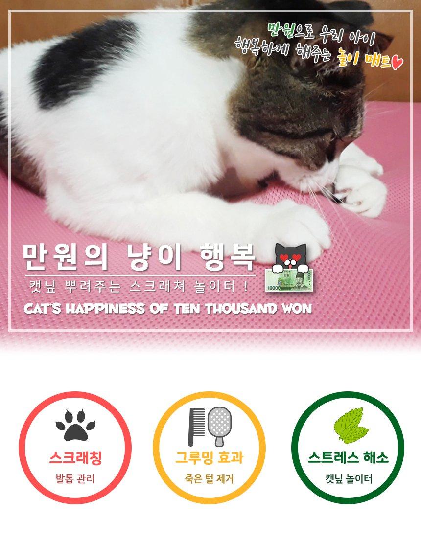 고양이 스크래쳐 만원의냥이행복 캣닢 장난감 놀이터 - 초코펫하우스, 14,100원, 장난감/스크래쳐, 스크래쳐